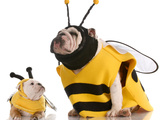 Bulldog Bee Mother And Daughter Photographic Print by Willee Cole
