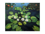 Water Lilies Art by  kirilstanchev