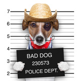 Bad Mexican Dog Photographic Print by Javier Brosch