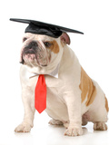 Pet Graduation - English Bulldog Wearing Graduation Cap And Red Tie Photographic Print by Willee Cole