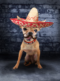 A Tiny Chihuahua With A Sombrero Hat On Papier Photo par  graphicphoto