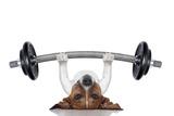 Personal Trainer Dog Fotografisk tryk af Javier Brosch