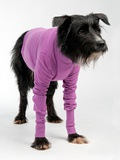 Funny Dog Wearing Sweater Isolated On White Background Photo by  vitalytitov