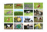 Farm Collage Posters by  miff32