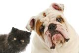 Dog And Cat Fotografisk tryk af Willee Cole