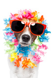 Funny Dog Hawaiian Lei And Sunglasses Photographic Print by Javier Brosch