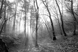 Autumn Forest With Fog And Lights Photographic Print by  udvarhazi