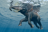 An Elephant Swims Through The Water Fotografisk tryk af 1971yes