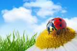 Ladybug On Flower Under Blue Sky With Clouds Posters by Tiplyashin Anatoly