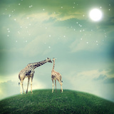 Giraffes In Friendship Or Love Concept Image Photographic Print by  Melpomene