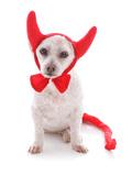 Bad Dog Halloween Devil Costume Prints by  lovleah