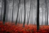 Winter Landscape Fotografisk tryk af  jpcasais
