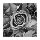 Sorrow Rose Reprodukcje autor zirconicusso
