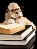 American Cocker Spaniel Wearing Reading Glasses Photographic Print by  Lilun