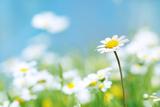 Flowers Fotografisk tryk af photoslb com