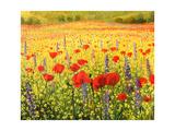 Sea Of Blossom Kunstdrucke von  kirilstanchev