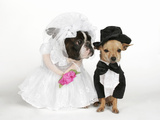 The Wedding Reprodukcja zdjęcia autor graphicphoto