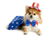 Uncle Sam Pup Photographic Print by  yarndoll