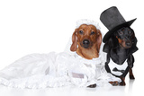 Fashionable Dachshund Dog Wedding Prints by  Jagodka