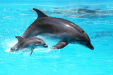 Dolphin With A Baby Floating In The Water Prints by Elena Larina