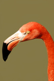 Flamingo Photographic Print by  yuran-78
