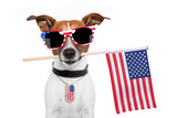 American Dog Photographic Print by Javier Brosch
