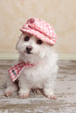 Trendy Cute Dog Photographic Print by  lovleah