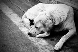 Homeless Stray Dog Prints by  Zoom-zoom