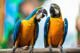 A Pair Of Parrots Photo by  soulxray