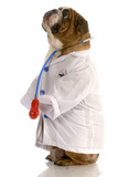 Bulldog Doctor Photographic Print by Willee Cole