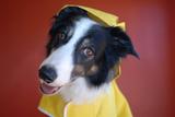 Surprised Dog Poster van  Goldenwheels