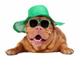 Dog Wearing Green Straw Hat And Sun Glasses, Isolated Prints by  vitalytitov