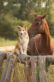 Red Border Collie Dog And Horse Photographic Print by  Ksuksa