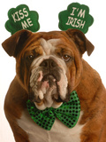 Bulldog Kiss Me I'M Irish Photographic Print by Willee Cole