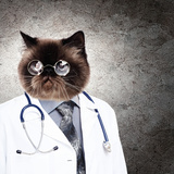 Funny Fluffy Cat Doctor In A Robe And Glasses. Collage Poster by Sergey Nivens