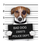 Mugshot Dog Photographic Print by Javier Brosch