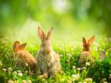 Rabbits Fotografisk tryk af Subbotina Anna