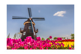 Netherland Fields Print by  cnkdaniel