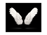 White Wings Posters by  Microvector