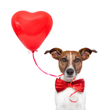 Dog In Love Photographic Print by Javier Brosch