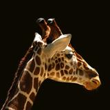 Giraffe Print by  yuran-78