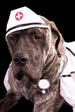 Nurse Puppy Posters by  crysrob