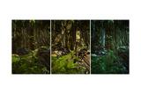 Wilderness Scene Poster by Atelier Sommerland