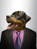 Rottweiler Dog Dressed Up As Formal Business Man Photographic Print by  Nosnibor137