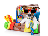 Summer Holiday Dog Photographic Print by Javier Brosch