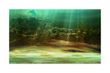 Underwater Prints by Atelier Sommerland