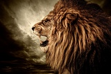 Roaring Lion Against Stormy Sky Photographic Print by NejroN Photo