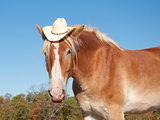 Funny Image Of A Blond Belgian Draft Horse Wearing A Cowboy Hat Posters by Sari ONeal