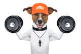 Fitness Dog Print by Javier Brosch