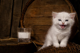 White Hungry Pussy Cat With Milk On Wooden Background Posters by  PH.OK